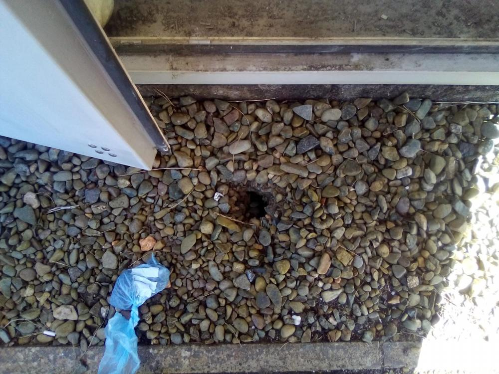 Rodent Burrows Treated In Routine Pest Control Inspection